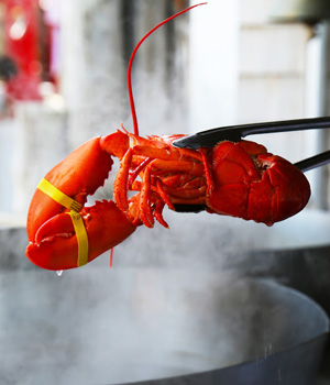 A lobster is dropped in a pot at a seafood restaurant