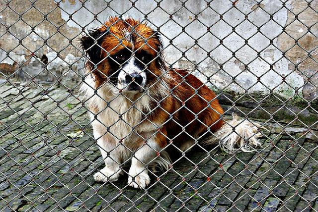 animal welfare cost of care