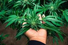home grow medical marijuana