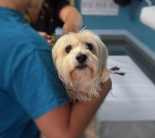 veterinarians and the prescription drug monitoring program