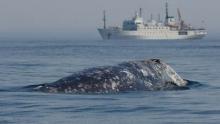 fossil fuels off-shore